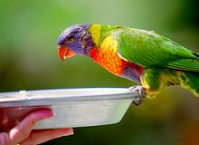 小鳥を飼っている方へ――病気にならない飼い方とは