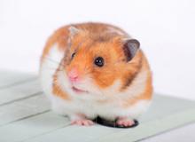 小動物の病気と診療