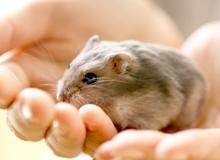 富士森公園動物病院での小動物治療について
