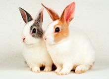 ウサギの病気と診療