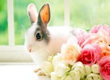 ウサギを飼っている方へ  病気にならない飼い方とは